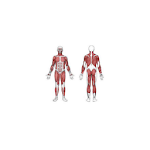 Sports Injury Clinic Icon