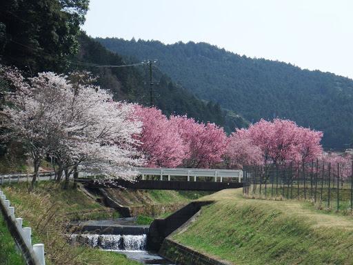 桜を見ながらゆっくりと