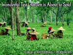 Tea Garden For Sale in Reasonable Cost at North Bengal