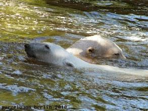 Photo: Knut und Gianna baden :-)