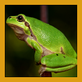 Frog Sounds Fun Android APK Download Free By Wabdee Studio