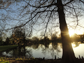 Photo: Tree by a lake at sunset at Eastwood Park in Dayton, Ohio.