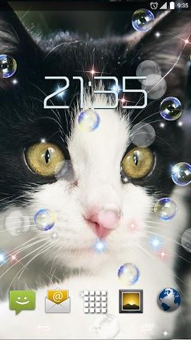 android Cute Cats HD Live Wallpaper Screenshot 4