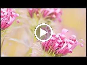 Video: Antonio Vivaldi  La Silvia (RV 734) - Aria [Silvia]  Mio ben s'io la ti credessi -