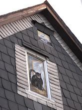 Photo: Die Tauben sind unerreichbar für die traurige Katze