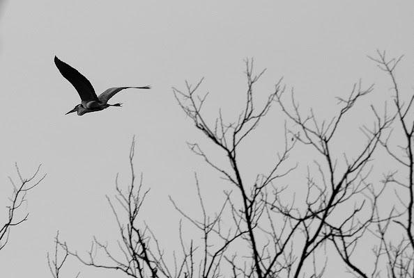 Fly Away di Enve61
