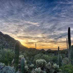 Saguaro National Park by Charlie Alolkoy - Landscapes Deserts ( desert, sunset, sunrise, cactus )