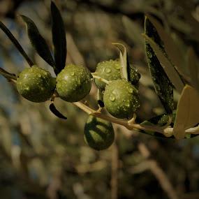 by Sara Verdini - Nature Up Close Gardens & Produce
