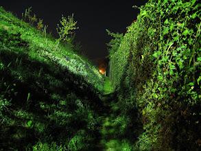 Photo: Elf pathway...