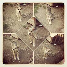 Photo: Pet portrait - country dog on duty! #intercer #dog #pet #romania #rural - via Instagram, http://instagr.am/p/MGfI85pfv7/