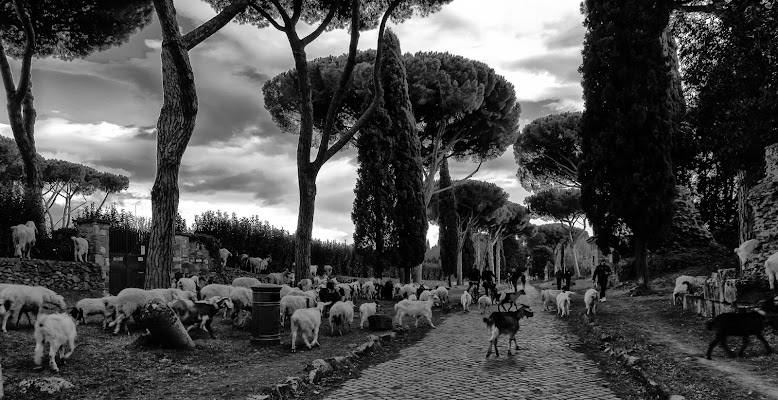 Pecore e....Pedoni di DanteS