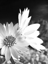 Photo: Black and white photo pale flowers at Carriage Hill Metropark in Dayton, Ohio.