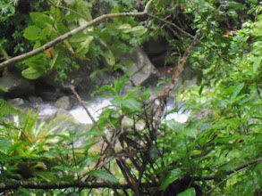 Photo: La Mina hike in El Yunque National Forest