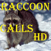 Raccoon Calls HD