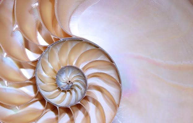 Nautilus di MA