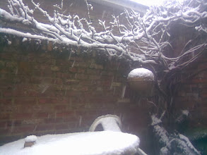 Photo: The vines & patio table getting a snow covering as the day wore on. 14/1/13.