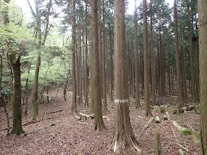 右に間伐帯