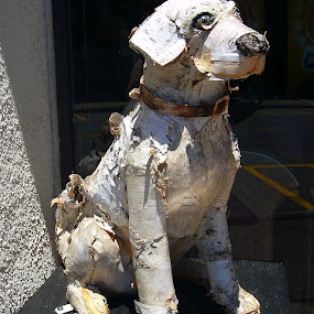 Dog Days of summer 3 by Peggy LaFlesh - Artistic Objects Other Objects ( artistic, dog, colorful )