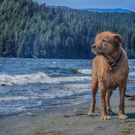 In His Element by Brenda Baird - Animals - Dogs Portraits