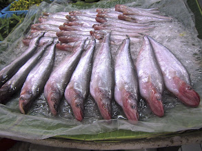 Photo: sheat fish in the fresh seafood section of Or Tor Kor