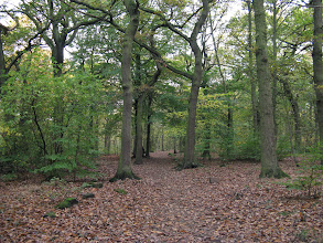 Photo: Top Path on Route to the Allotments. Northcliffe Wood Shipley