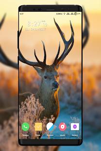 Deer Wallpaper - náhled