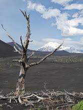 Photo: с безымянной сопки с видом на Толбачик