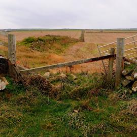 A Field Near Abereiddi, Pembrokeshire, UK. by DJ Cockburn - Landscapes Prairies, Meadows & Fields ( farm, field, fence, abereiddi, autumn, national trust, abereiddy, heath, porthgain, arable, gate )