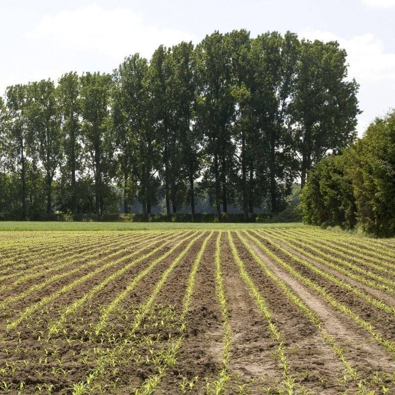 NATUUR - Bosjes in landbouwgebied zijn belangrijk voor bestuiving