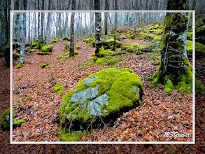 Photo: Forêt de Lacaune