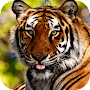 Tiger HD Wallpaper APK icon