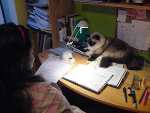 Photo: Aminka sa usilovne pripravuje na skúšky :-D