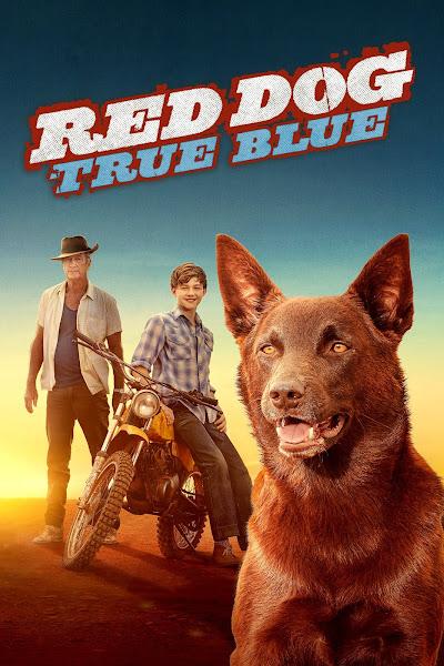 Red Dog True Blue Reviews