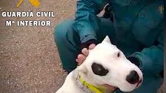Uno de los animales a los que el investigado cortó las orejas.