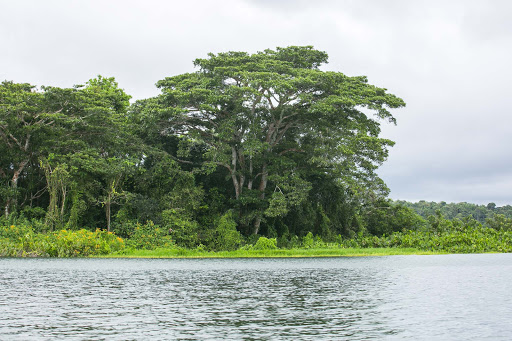 Gamboa-rainforest-in-Panama.jpg - The richly vibrant Gamboa rainforest along the Panama Canal's Gatun Lake.