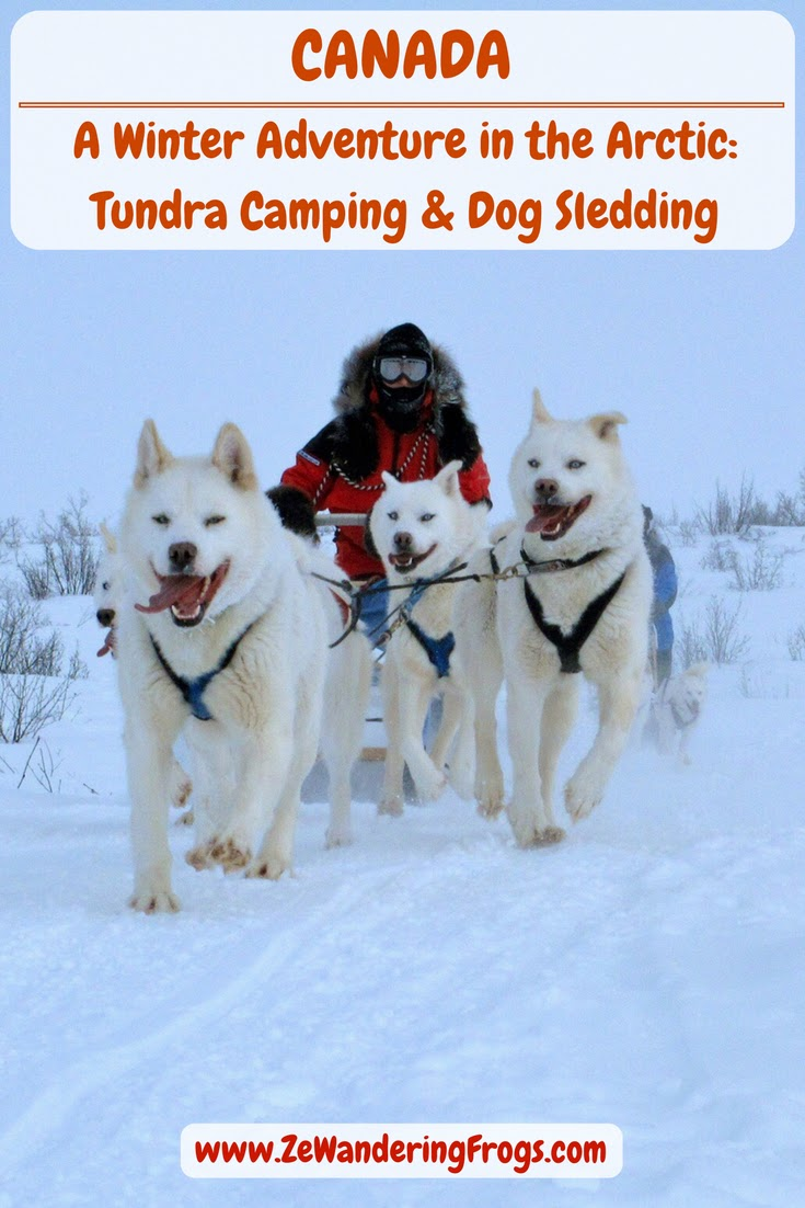 Dog sledding across the frozen tundra