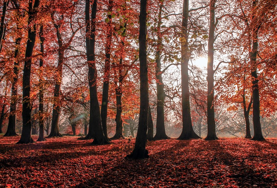 Forest of Light by Tracey Dolan - Landscapes Forests ( oranges., reds, trees, forest, view, leaves, light, sun, colours )