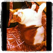 Photo: Breathing the summer air on the balcony chair #cat #catstagram #kitty #pet #intercer #summer #chair - via Instagram, http://instagr.am/p/MY6u6XJfth/