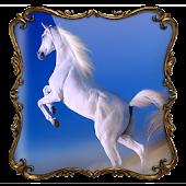 Horses Photo Frames