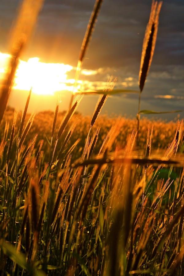by Joanna Vandervalk - Landscapes Prairies, Meadows & Fields