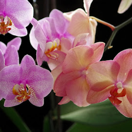 My Orchids by Ingrid Anderson-Riley - Flowers Flower Arangements