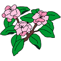 Cherry Blossom Bakery icon