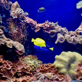 Miami Sequarium by Neil Dern - Digital Art Things ( coral, fish, water )