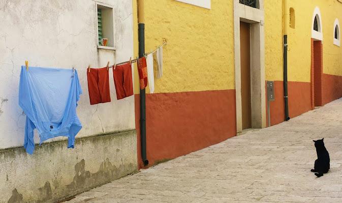 Il gatto di vicolo colorato di Jorjo
