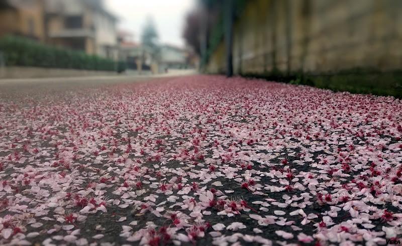 Voglia di primavera di Vera