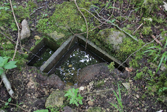 Photo: In het pad: wat zou dit kunnen zijn?
