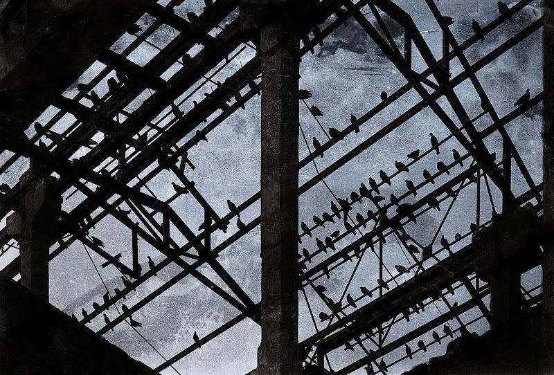 La fabbrica... dei piccioni! di Giovi18