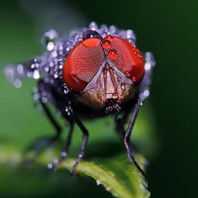 flies by Miswar Rasyid - Instagram & Mobile Android