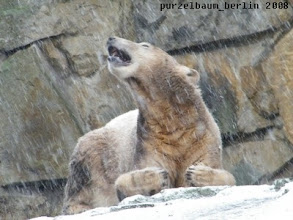 Photo: Knut faengt Schneeflocken :-)