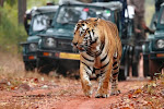 India tour packages 2020 from South Africa
